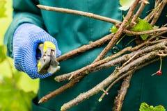 Le travailleur est des branches de buisson d'élagage Photo stock