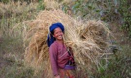 Le travailleur heureux de gisement de riz, femme porte un grand paquet de paille, Népal image stock
