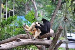 Le tre scimmie Fotografie Stock