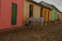 Le Trinidad, Cuba Cheval blanc Rue cubaine traditionnelle avec la route de pavés ronds et les maisons multicolores Photographie stock