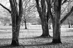 Le trio tranquille Photographie stock libre de droits