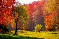 Le triomphe d'automne Photographie stock libre de droits