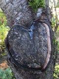 Le tronçon d'arbre ressemble à un coeur avec de la résine Photographie stock libre de droits