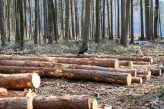 Le tronçon d'arbre se trouve au sol photo libre de droits