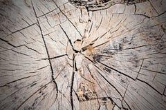 Le tronçon d'un arbre abattu Photo stock