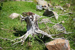Le tronçon d'un vieil arbre Image libre de droits