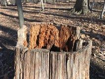 Le tronçon dans la forêt montre le déboisement photographie stock libre de droits