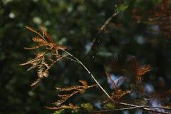 Le tronc avec le jaune laisse briller dans l'après-midi ensoleillé Photo libre de droits