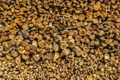Le tronc d'arbre dans la jungle Photos libres de droits
