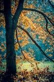 Le tronc d'arbre et l'orange noirs d'automne de branches part image stock