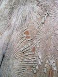 Le tronc d'arbre mangent le ver sans écorce Image libre de droits