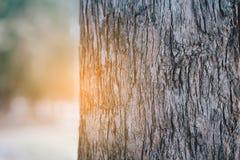 Le tronc d'un arbre avec la belle lumière orange Photos libres de droits