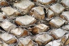 Le tronc d'un palmier Photo libre de droits