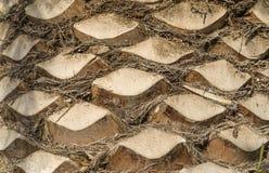 Le tronc d'un palmier Photo stock