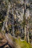 Le tronc d'un vieil arbre tombé au milieu d'une forêt Image stock