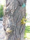 Le tronc de l'arbre avec le jeune ressort vert pousse Photos libres de droits