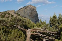 Le tronc et les branches des arbres semblent être d'un conte de fées semblable aux racines sans feuilles s'élevant dans un montag image libre de droits