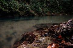 Le trou bleu intérieur de Belize Photo stock