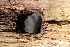 Le trou dans le conseil en bois Image stock