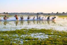 Le troupeau courant de chevaux dans le lac Photos libres de droits
