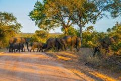 Le troupeau d'éléphants devient un chemin de terre Photographie stock
