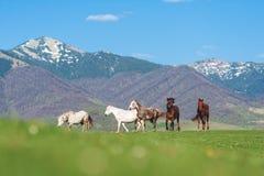 Le troupeau de chevaux dans les montagnes photos libres de droits