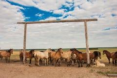 Le troupeau de chevaux sur le pâturage Images libres de droits