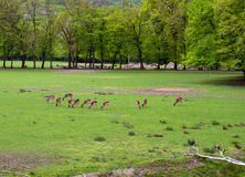 Le troupeau de deers en stationnement Photos libres de droits