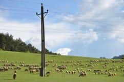 Le troupeau des moutons alimentent sur l'herbe sur le pré vert à côté du pilier électrique Images libres de droits