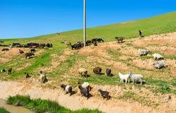 Le troupeau sur la colline photo stock