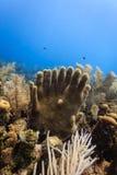 Le tube éponge l'augmentation du récif coralien sous forme de doigts sur deux mains s'étreignant des mains et un grand choix d'au Image libre de droits