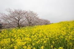 Le tunnel de fleurs de cerisier et les champs du nanohana fleurissant jaune chez Kumagaya Arakawa Ryokuchi se garent dans Kumagay Images stock