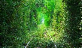 Le tunnel de l'amour en Roumanie Images stock