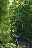 Le tunnel de l'amour a formé par des arbres en Ukraine Photo libre de droits
