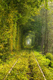 Le tunnel de l'amour sur le chemin de fer photo stock