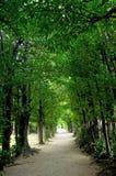 Le tunnel des arbres Image libre de droits