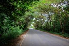 Le tunnel des arbres en Thaïlande Photos stock