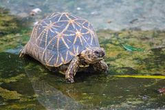 Le Turttle photo stock