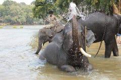 Le Tusker Image libre de droits