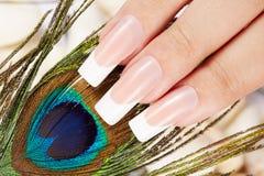 Le unghie con il manicure francese ed il pavone artificiali lunghi mettono le piume a Immagini Stock