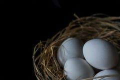 Le uova bianche in uova rivoltano il fieno su un fondo nero, fine su, isolato immagini stock libere da diritti