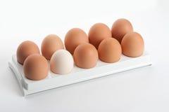 Le uova della gallina nel supporto dell'uovo Fotografia Stock Libera da Diritti
