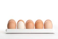 Le uova della gallina nel supporto dell'uovo Fotografie Stock