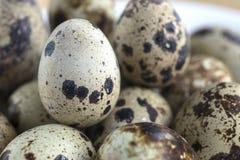 Le uova della quaglia Immagine Stock Libera da Diritti