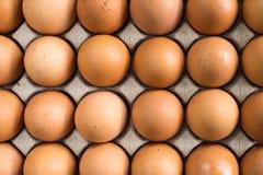 Le uova di gallina in polpa marrone modellano il pacchetto del vassoio Immagine Stock Libera da Diritti