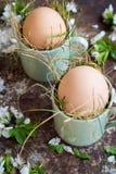 Le uova di Pasqua naturali non colorate in tazze verdi del caffè espresso, concetto felice di pasqua con la molla bianca fiorisce Immagini Stock