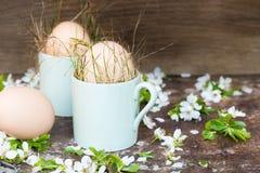 Le uova di Pasqua naturali non colorate in tazze verdi del caffè espresso, concetto felice di pasqua con la molla bianca fiorisce Fotografia Stock