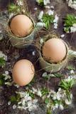 Le uova di Pasqua naturali in tazze verdi del caffè espresso, concetto felice di pasqua con la molla bianca fiorisce, retro fondo Immagine Stock