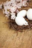 Le uova di Pasqua in nido con la molla fiorisce la decorazione Fotografia Stock