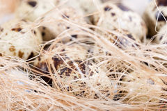 Le uova di quaglia si trovano in un nido sui bordi Fotografia Stock